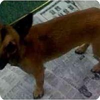 Adopt A Pet :: Leo - Fowler, CA