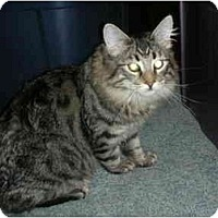 Adopt A Pet :: Zaney - Washington Terrace, UT