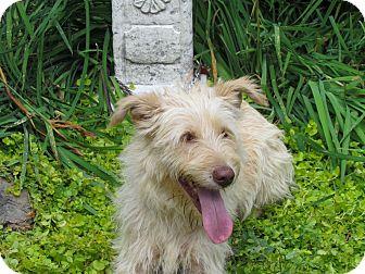 Terrier (Unknown Type, Medium) Mix Dog for adoption in Hartford, Connecticut - DAHLIA
