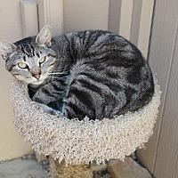 Adopt A Pet :: SONNY - San Pablo, CA