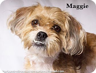 Shih Tzu Mix Dog for adoption in Baton Rouge, Louisiana - Maggie