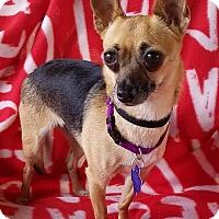 Adopt A Pet :: Safari - San Antonio, TX