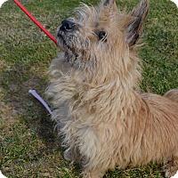 Adopt A Pet :: Lucy - East Smithfield, PA