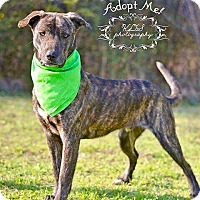 Adopt A Pet :: Coby - Springfield, MA