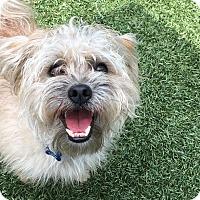 Adopt A Pet :: Toby - Chula Vista, CA