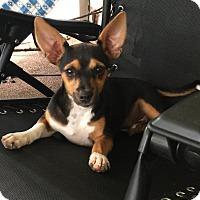 Adopt A Pet :: Radar - Crestview, FL
