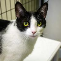 Adopt A Pet :: Patches - Pendleton, OR