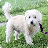 Adopt A Pet :: Moses - Columbus, OH