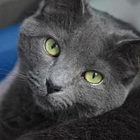 Adopt A Pet :: Daisy - Howell, MI