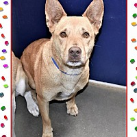 Adopt A Pet :: Buddy - San Jacinto, CA