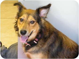 Collie Mix Dog for adoption in Boynton Beach, Florida - Anya
