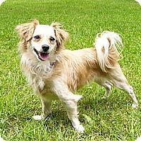 Adopt A Pet :: Hayley Rose - Mocksville, NC