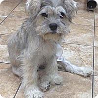 Adopt A Pet :: Jerry - Lancaster, OH