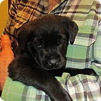 Adopt A Pet :: Hunter - batlett, IL