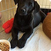 Adopt A Pet :: Jasper - Santa Monica, CA