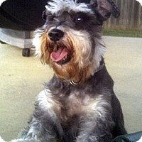 Adopt A Pet :: Kricket - Glenpool, OK