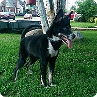 Adopt A Pet :: Sport - Hamilton, ON