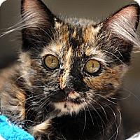 Adopt A Pet :: Molly - Monroe, GA