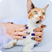 Adopt A Pet :: Tara - New York, NY