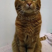Adopt A Pet :: Garfield - St. James City, FL