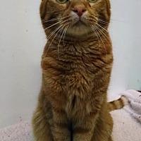 Adopt A Pet :: Garfield - St. James City, FL
