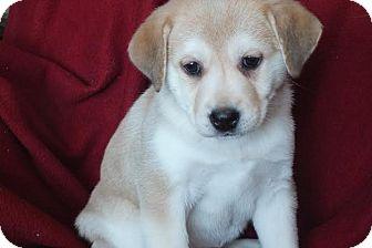 Pug Mix Puppy for adoption in Saskatoon, Saskatchewan - Orchid