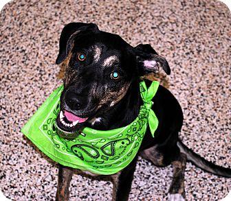 Hound (Unknown Type) Mix Dog for adoption in Aiken, South Carolina - Sophie