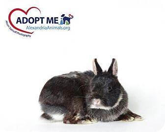 Dutch for adoption in Alexandria, Virginia - Templeton