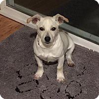 Adopt A Pet :: Buddy - North Bend, WA
