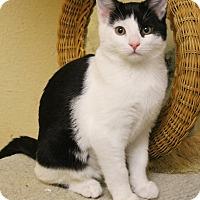 Adopt A Pet :: Bobble - McDonough, GA