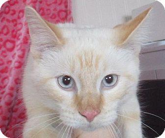 Domestic Shorthair Cat for adoption in Lloydminster, Alberta - Texas