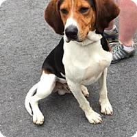 Adopt A Pet :: Copper - Cashiers, NC