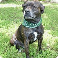 Adopt A Pet :: Bruzer - Mocksville, NC
