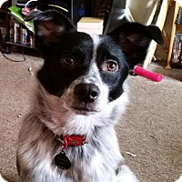 Adopt A Pet :: Thora Sally - Adoption Sponsored - Richmond, IN