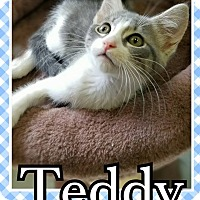 Adopt A Pet :: Teddy - Edwards AFB, CA