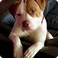 Adopt A Pet :: Jugger (COURTESY POST) - Baltimore, MD