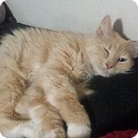 Adopt A Pet :: Thea - Sacramento, CA