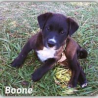 Adopt A Pet :: Boone - DeForest, WI
