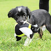 Adopt A Pet :: Country Ham~adopted! - Southbury, CT