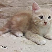 Adopt A Pet :: Sugar Rae - Fullerton, CA