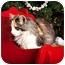 Photo 3 - Calico Kitten for adoption in Owensboro, Kentucky - Lacy