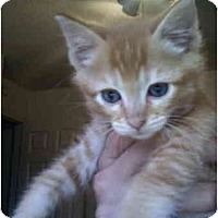 Adopt A Pet :: Toby - Davis, CA