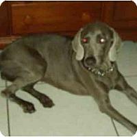 Adopt A Pet :: Gracie - Eustis, FL