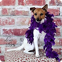 Adopt A Pet :: Lucy in Houston - Houston, TX