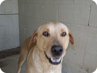 Labrador Retriever Mix Dog for adoption in Thomaston, Georgia - Nancy