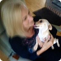 Adopt A Pet :: Sophie - Mount Kisco, NY