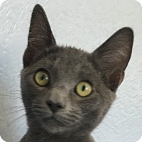 Adopt A Pet :: Donald - Winchester, CA