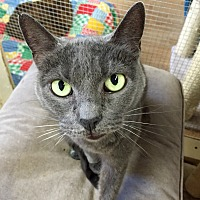 Adopt A Pet :: Jingles - Wilmington, DE
