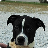 Adopt A Pet :: Marley*ADOPTED!* - Chicago, IL