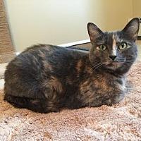 Adopt A Pet :: Jade - Budd Lake, NJ